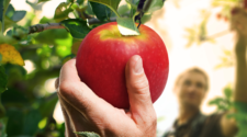 Agricultores ecológicos protegen el patrimonio alimentario