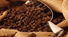 Café orgánico suma ganancias a productores