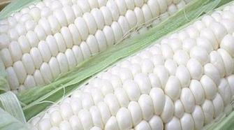 Corteva Agriscience presenta en México nueva marca de semillas mejoradas
