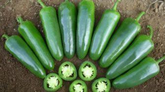Emprender con jalapeños orgánicos