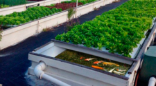 Estudiantes convierten residuos de peces para nutrición de cultivos