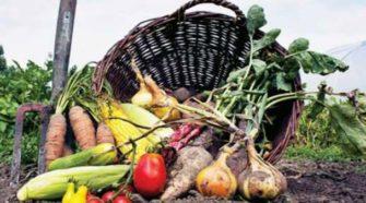 Sikkim es declarado el primer estado 100 por ciento orgánico del mundo