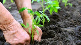 Soluciones vegetales contrarrestan el uso de insumos químicos