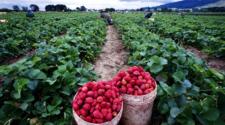 Valle del Yaqui apuesta al futuro por la agricultura orgánica