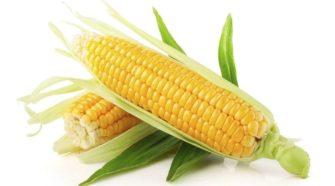 Maíz mejorado: más opciones para los agricultores