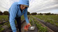 Red agrologística aportaría 100 mil mdp a México