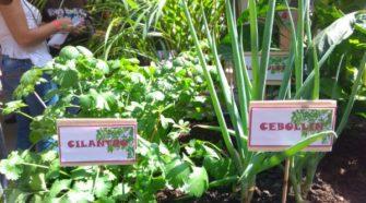 Agricultura urbana y periurbana: fuente complementaria de alimentos
