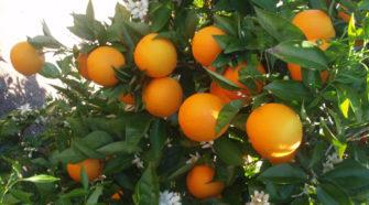 Afecta a productores de Florida acuerdo comercial con México