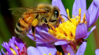 Crean vacuna para proteger a las abejas