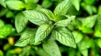 """Especialista pide """"escuchar"""" a las plantas"""