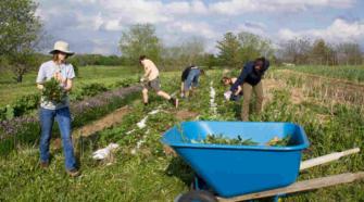 Evalúan impacto climático de la agricultura ecológica