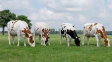 Nuevo alimento reduce flatulencias y aumenta rendimientos en las vacas