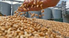 ¿Tregua comercial beneficia a los granos?