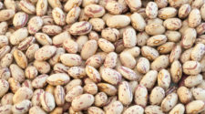 En busca de frijol resistente a sequías