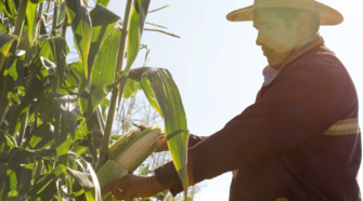 Gobierno federal crea organismo de seguridad alimentaria