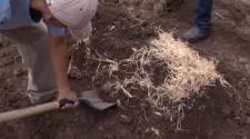 Impulsa el Inifap recuperación y protección de suelos agrícolas