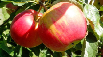 Italia es líder europeo en agricultura orgánica