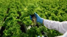 Abonos orgánicos: beneficios, tipos y contenidos nutrimentales