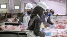 México cuenta ya con 61 plantas con certificación halal para exportación