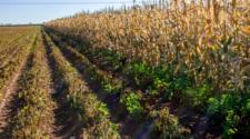 Publican declaratoria de afectaciones por heladas en Sonora