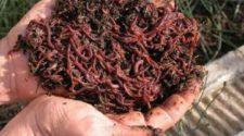 Emprendedora mexiquense crea abono orgánico con basura y lombrices