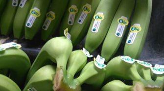 Panamá busca apoyo de España para fortalecer la certificación orgánica