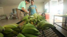 Presenta Panamá nueva autoridad de certificación orgánica