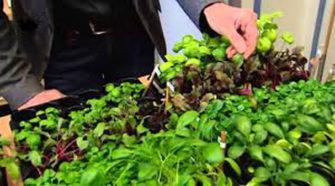 Cuba incentiva la agricultura urbana