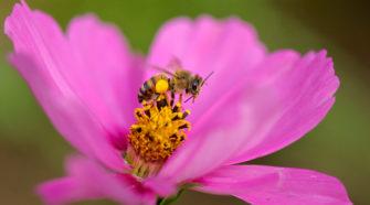 Pérdida de biodiversidad pone en riesgo la producción de alimentos