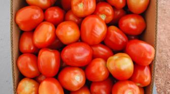 Advierten productores riesgo en exportación de tomate mexicano