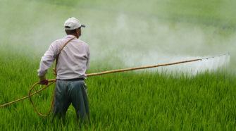 Aprueban actualización del marco regulatorio de plaguicidas