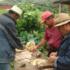 Capacitan a indígenas costarricenses en agroecología