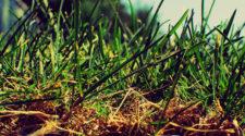 Especialista promueve transición hacia insumos orgánicos