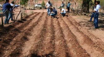 Productores de Tamaulipas reciben semillas para huertos ecológicos