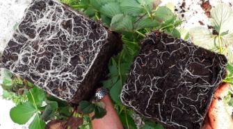 Científicos investigan hongos útiles para remediar suelos contaminados
