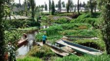 Desechos orgánicos recuperan suelo de chinampas