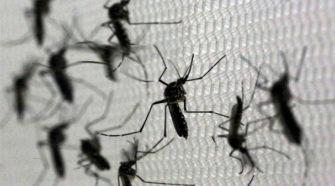 Bioinsecticida evitará el desarrollo del mosquito transmisor de sika y dengue