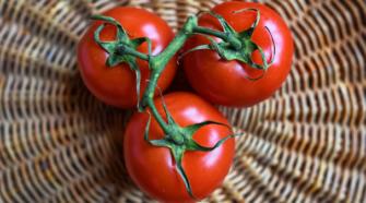 Temperatura cálida impulsará la producción de tomate en Baja California