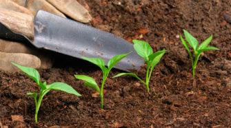 En Washington, ya es legal el uso de restos humanos como abono de jardín