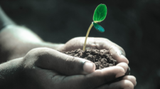 La FAO urge a implementar mecanismos para detener la erosión