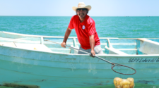Inicia temporada de pesca de medusa bola de cañón