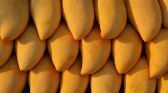 México se perfila como el mayor exportador de mango del mundo