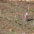 Sader llama a garantizar entrega de fertilizantes en Guerrero