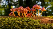 Hongos son causantes de buena salud de bosques y cultivos