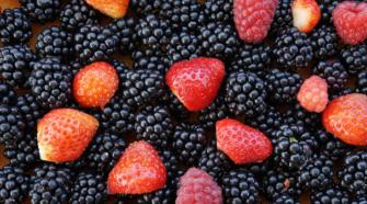Inauguran nuevo vivero de frambuesa y fresa en México