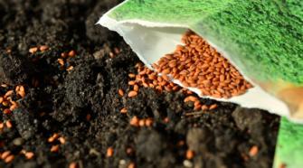 Microempresas semilleras de México compiten con transnacionales