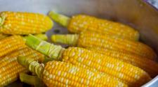 Cosecha récord de maíz en Sinaloa reducirá importaciones