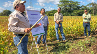 Liberan en Campeche variedades mejoradas de soya