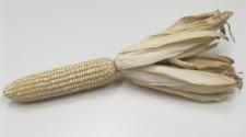 Producción de maíz blanco crece 8.6%