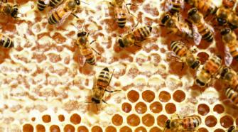 Producción de miel en riesgo por falta de lluvias en Zacatecas